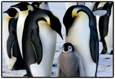 Schreibunterlage Mini 500 x 340 mm Pinguine Schreibtischunterlage