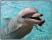 Schreibunterlage 650 x 500 mm Delphin Schreibtischunterlage