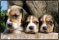Schreibunterlage Mini 500 x 340 mm Schreibunterlage Hunde