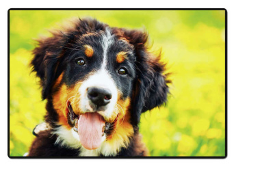 Schreibunterlage Mini 500 x 340 mm Poster Pad - Hund